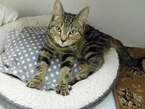 Cat and Rabbit Rescue Centre Chichester - Rehome a Pet