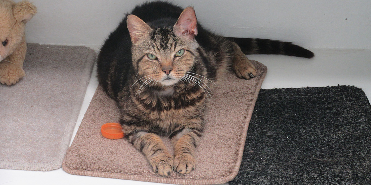 Cat and Rabbit Rescue Centre Chichester - Rehoming Cats