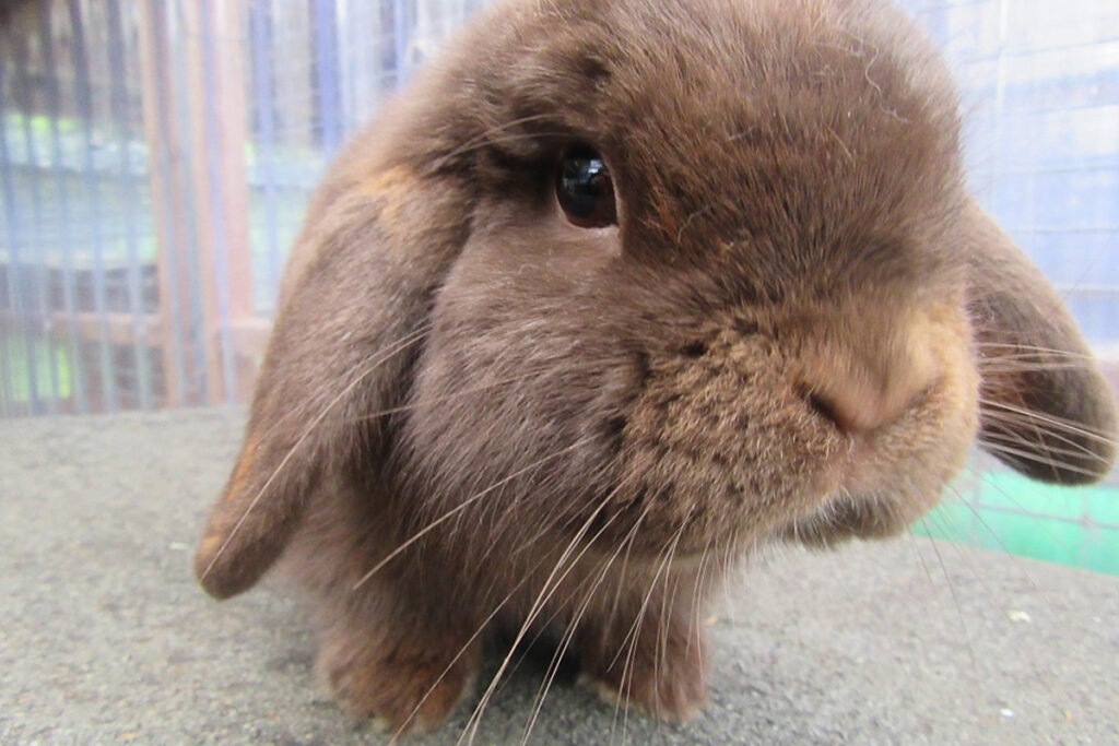Cat and Rabbit Rescue Centre Chichester - Rehoming Rabbits