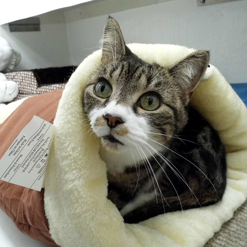 The Cat and Rabbit Rescue Centre - Donate Online