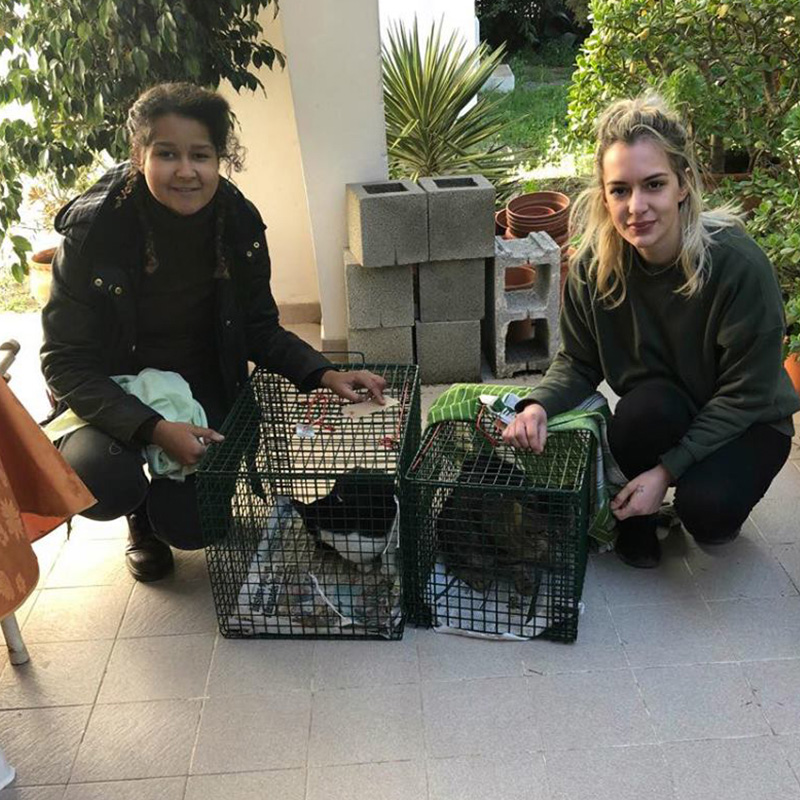 The Cat and Rabbit Rescue Centre - How We Help
