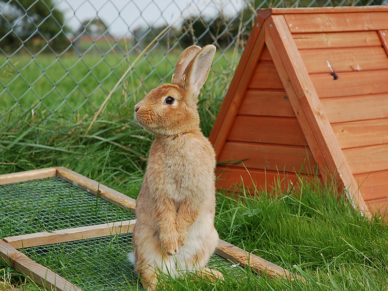 The Cat and Rabbit Rescue Centre - Adoption Centre for rabbits, cats and guinea pigs