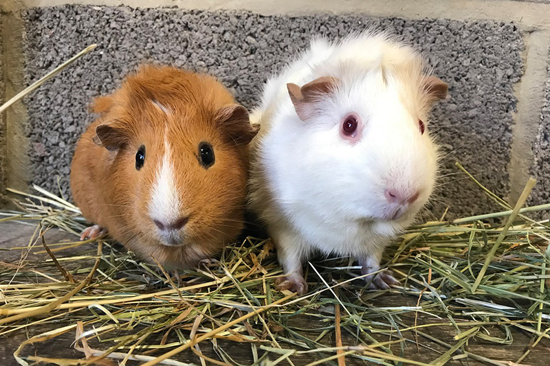 The Cat and Rabbit Rescue Centre - Educating Pet Owners