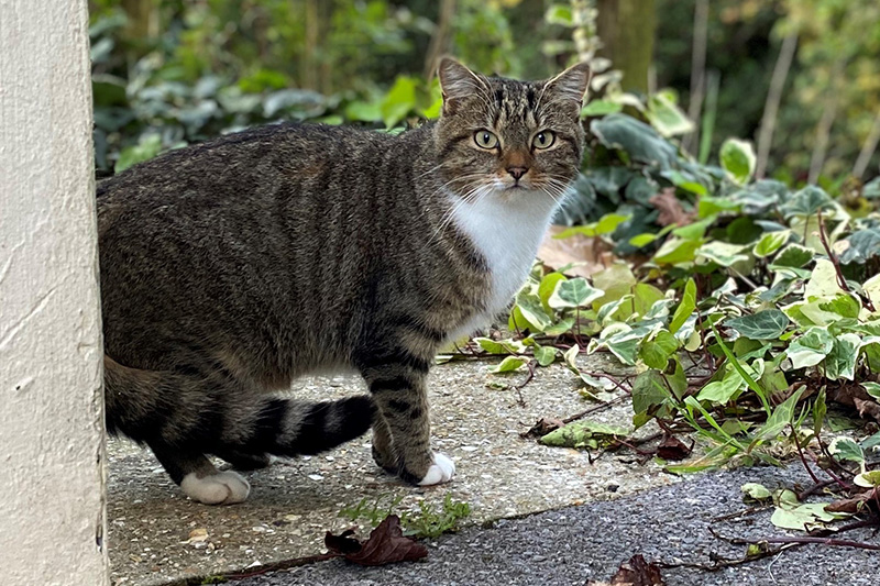 The Cat and Rabbit Rescue Centre - Feral Stray Cat Colonies