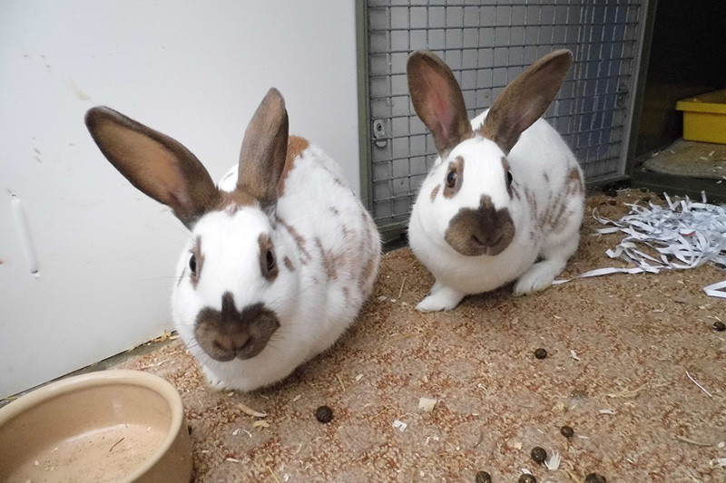The Cat and Rabbit Rescue Centre - Forever Home