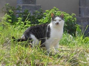 The Cat and Rabbit Rescue Centre - Sponsor Buzz
