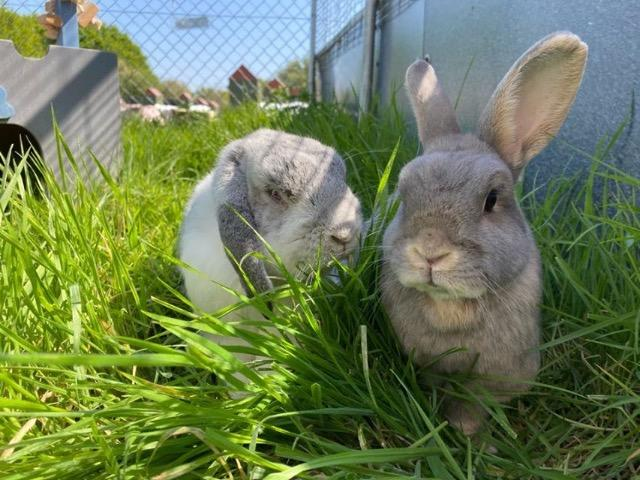 The Cat and Rabbit Rescue Centre - Sponsor Coffee and Florrie