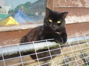 The Cat and Rabbit Rescue Centre - Sponsor Francesca