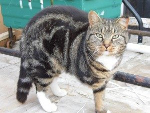 The Cat and Rabbit Rescue Centre - Sponsor Hulk