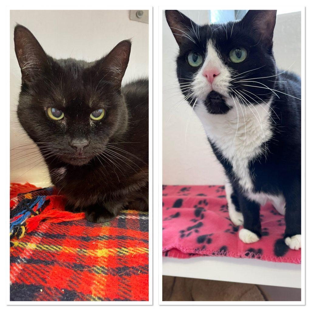 Cat and Rabbit Rescue Centre - Adopt a cat - Maura & Thimble