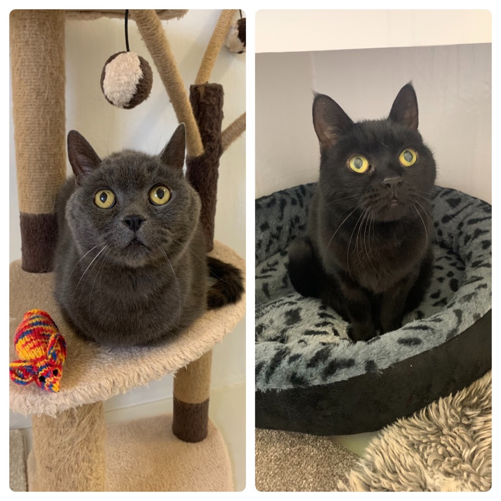 Cat and Rabbit Rescue Centre - Adopt a cat - Robbie Roo and Rosie May