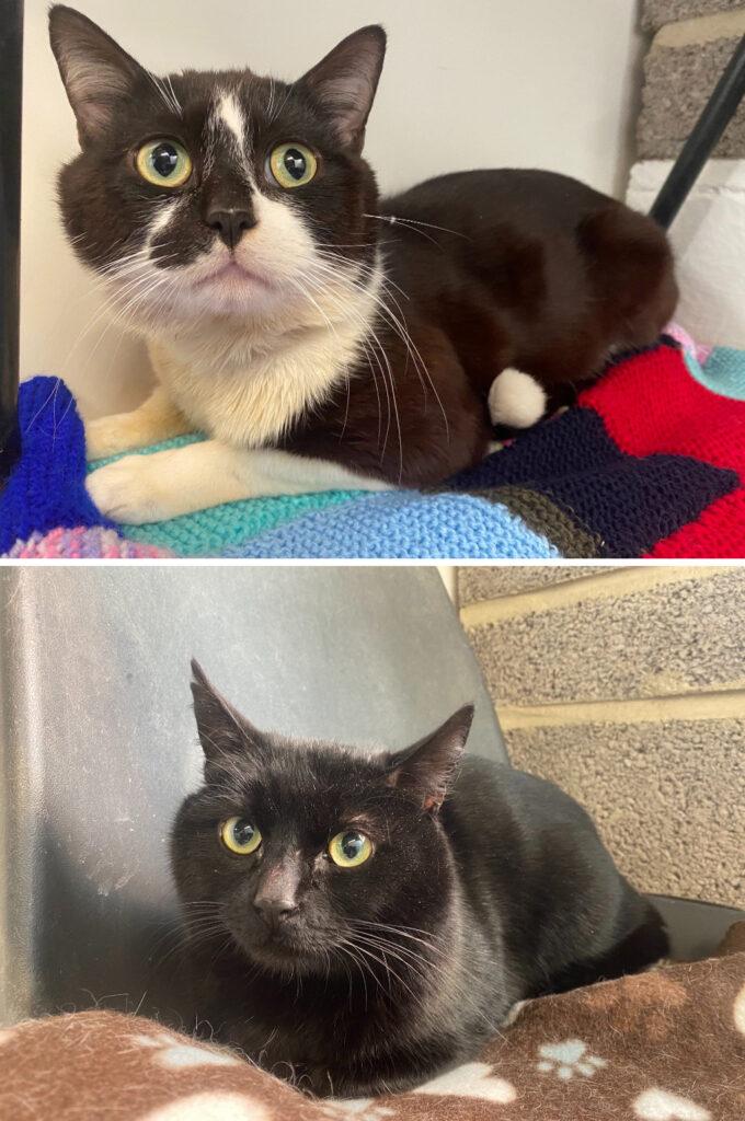 Cat and Rabbit Rescue Centre - Adopt a cat - Tibor & Tygo