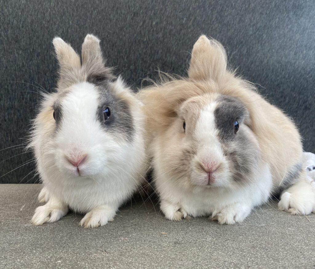 Cat and Rabbit Rescue Centre - Adopt a rabbit - Space Cake & Mooncake