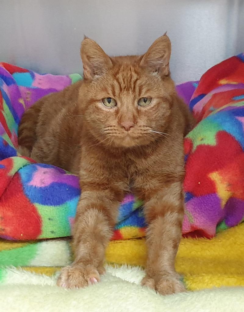 Cat and Rabbit Rescue Centre - Adopt a cat - Araminta