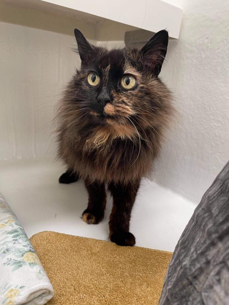 Cat and Rabbit Rescue Centre - Adopt a cat - Bea