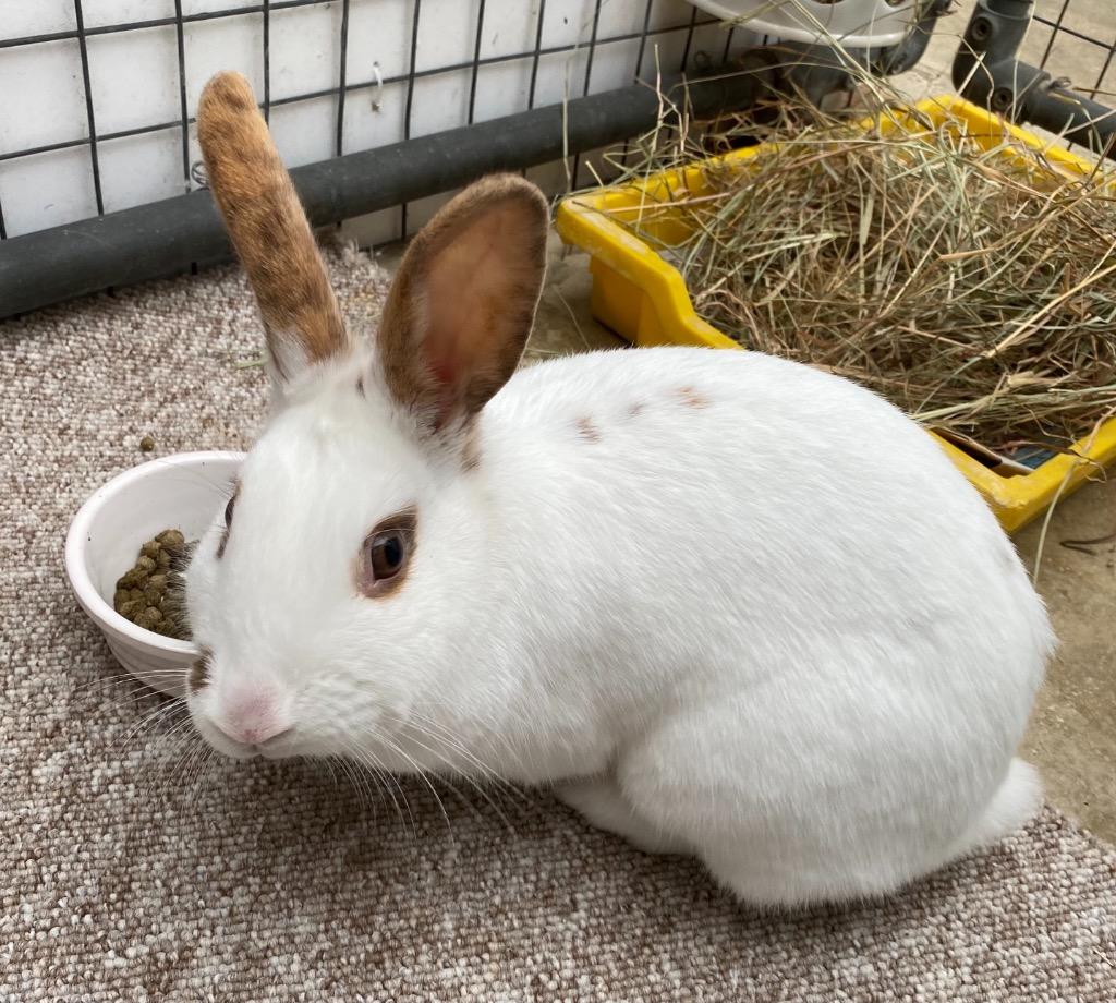 Cat and Rabbit Rescue Centre - Adopt a rabbit - Manila Sunshine