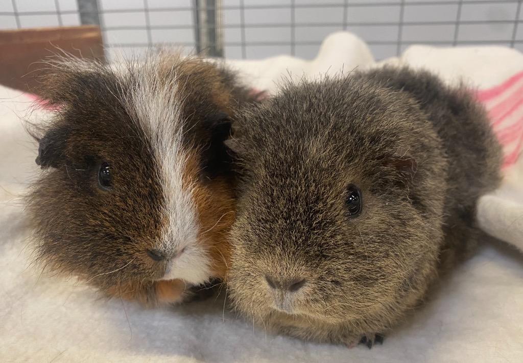 Cat and Rabbit Rescue Centre - Adopt a rabbit - Piccalilli & Sambar