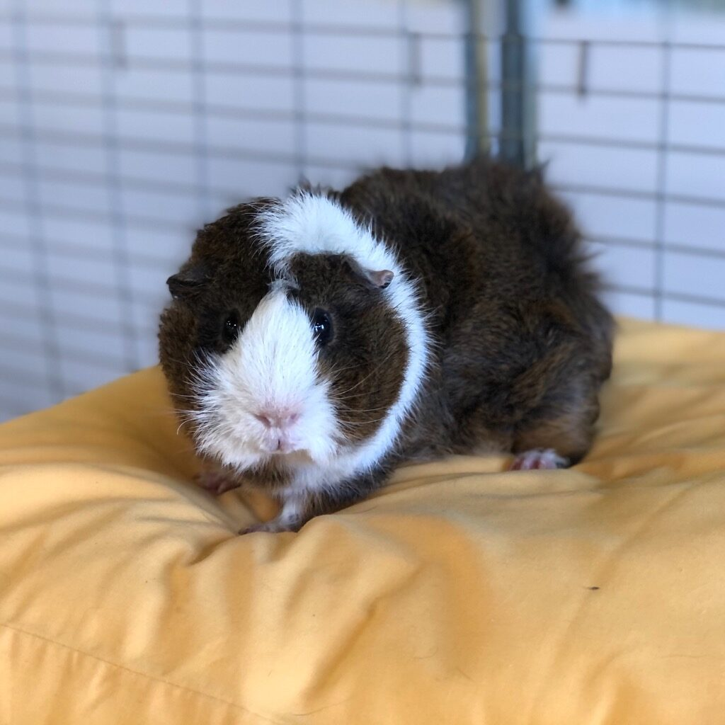 Cat and Rabbit Rescue Centre - Adopt a rabbit - Root Beer