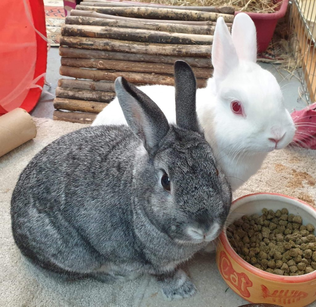 Cat and Rabbit Rescue Centre - Adopt a rabbit - Stella Artois & Boddingtons