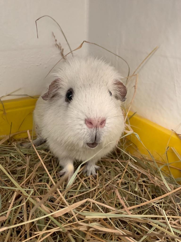 Cat and Rabbit Rescue Centre - Adopt a rabbit - Vanilla Buttercream