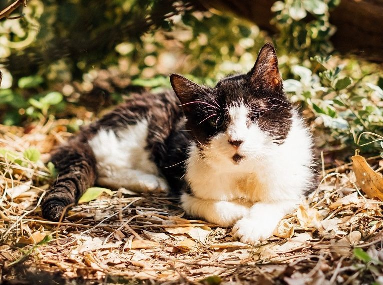 The Cat and Rabbit Rescue Centre - Caellums Fund