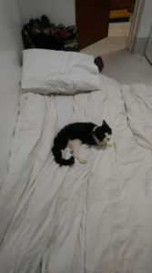 The Cat and Rabbit Rescue Centre - Caellums Fund - Caellums Last Night